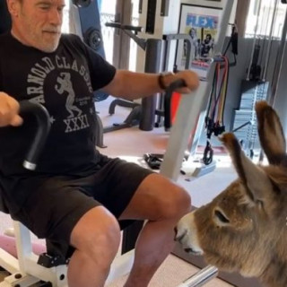 Arnold Schwarzenegger showed his training with a donkey